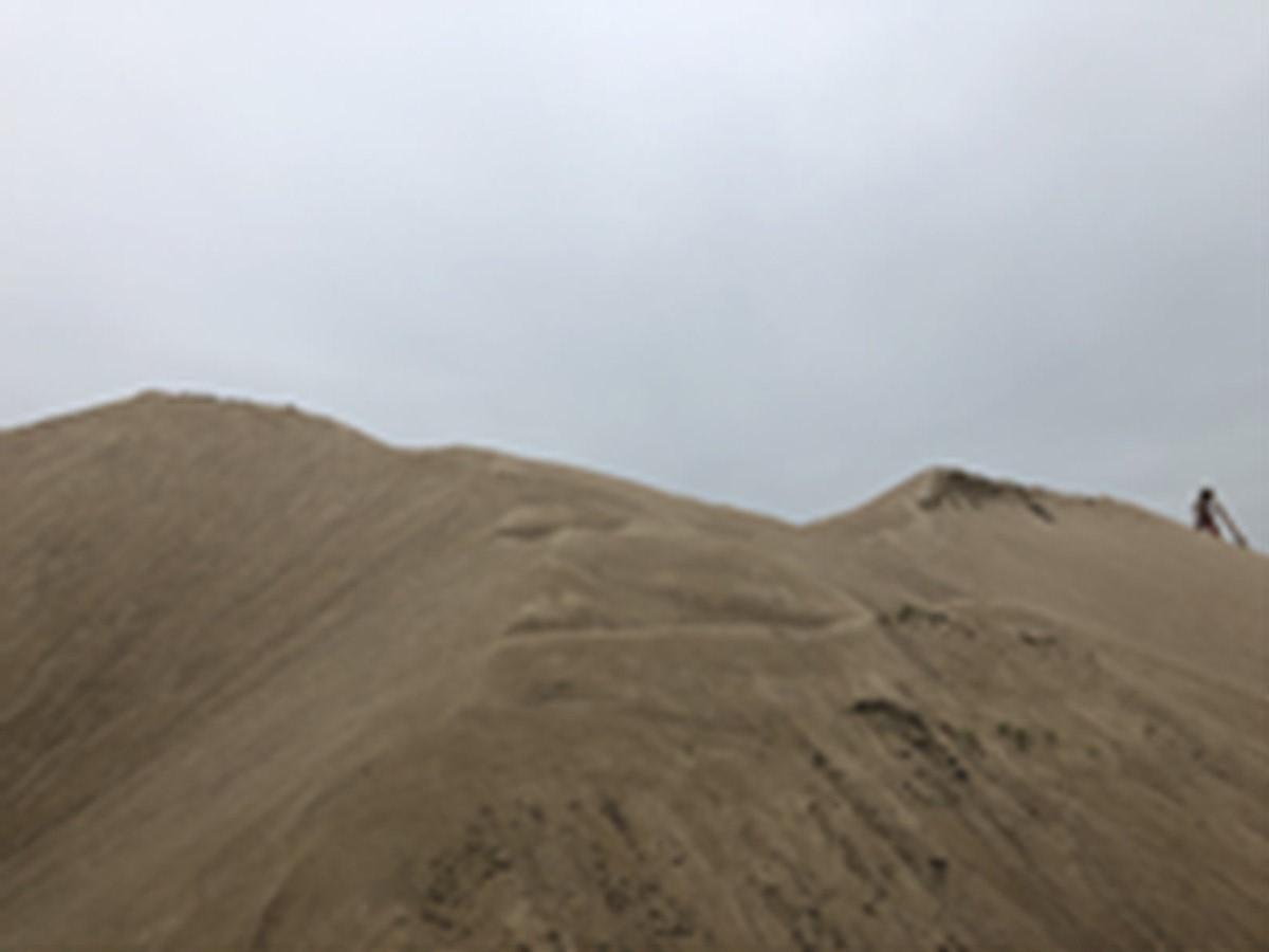 2020年4月14日依法处理海砂两批拍卖会